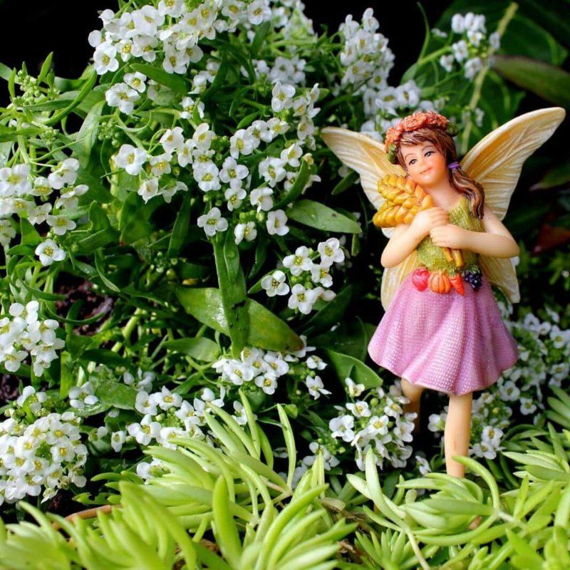Fairy Garden Farm Fairies 3
